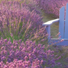 Cooking Calm: Transform Your Tastebuds with Lavender