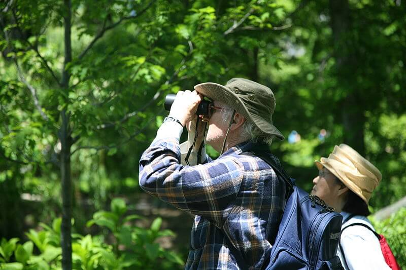 bird watching Hobbies for Your Health