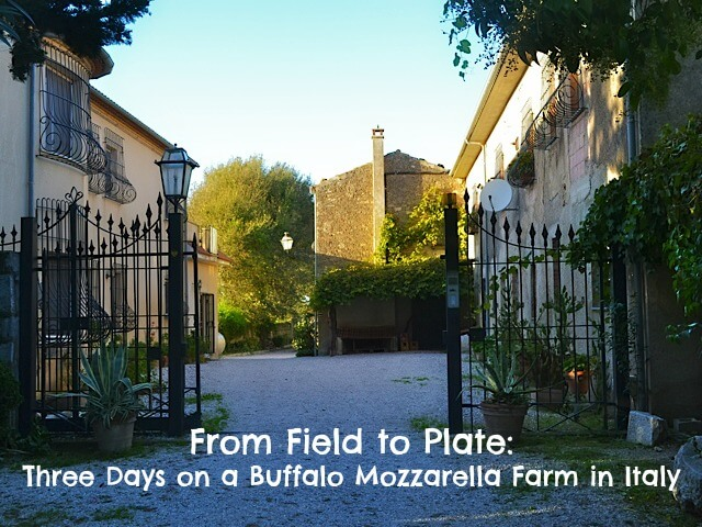 buffalo mozz cover From Field to Plate: Three Days on a Buffalo Mozzarella Farm in Italy