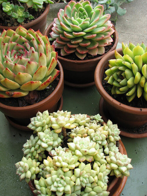 Party favors adults will love - Idee deco plante interieur ...