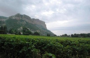 If You Love Wine with Seafood, You Will Love Cassis