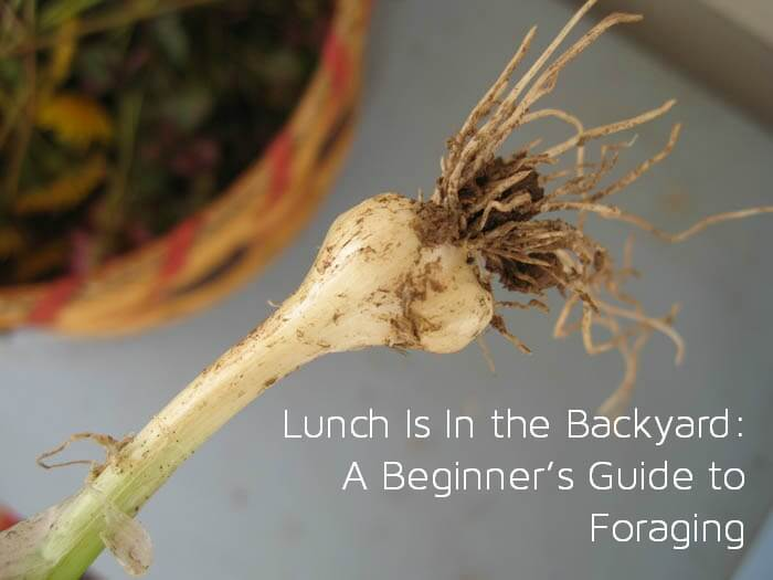 Lunch Is In the Backyard A Beginners Guide to Foraging