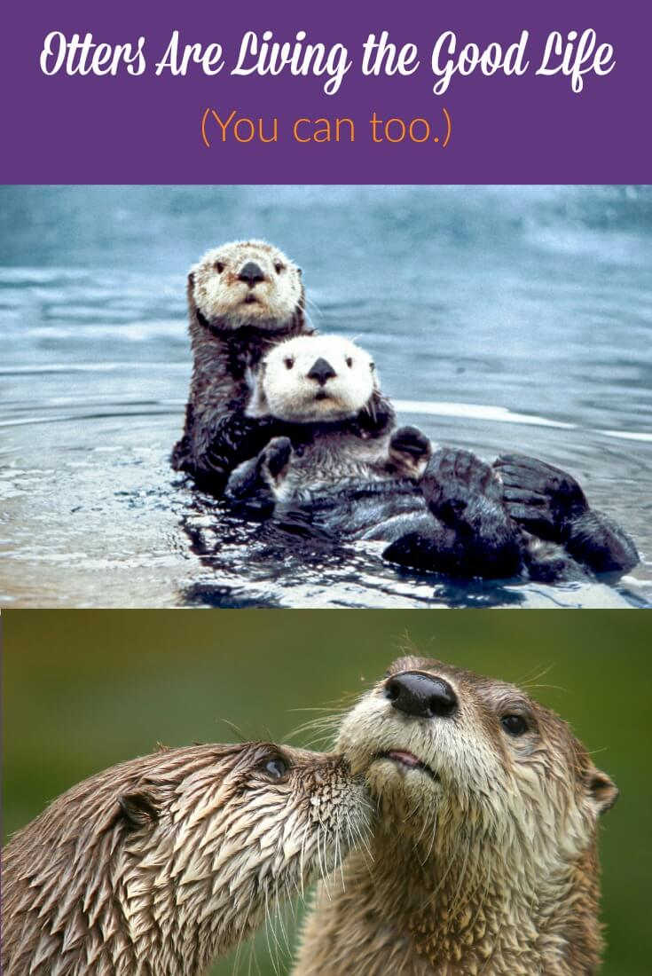 otters are living the good life