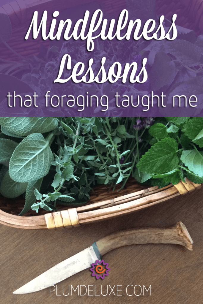 mindfulness lessons foraging taught me