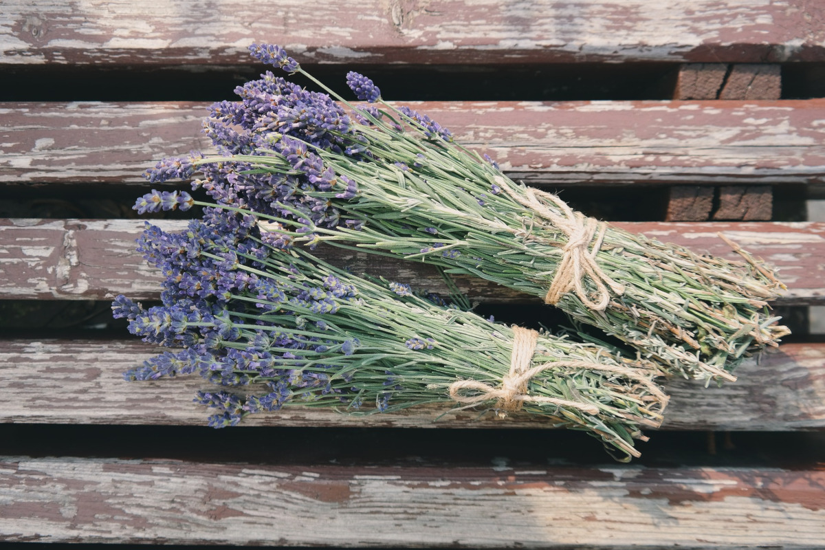 Two bundles of lavender tied with twine rest on a wooden bench.