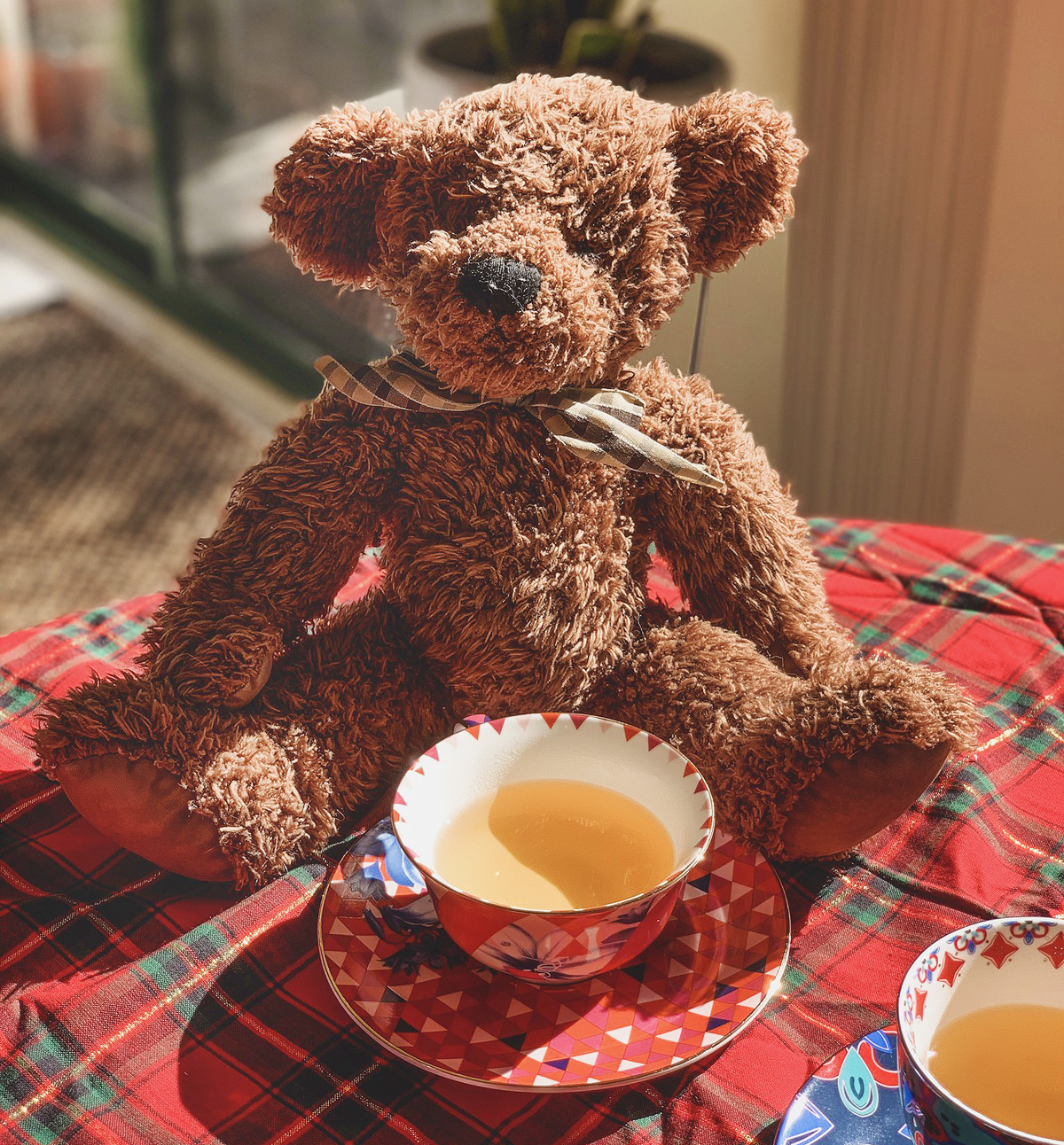 A brown teddy bear sits in front of a red patterned teacup on a red plaid blanket.