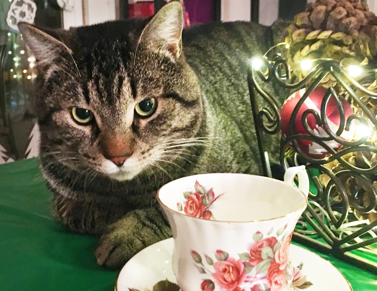 A large gray tabby cat is curled up behind a white and pink floral teacup and saucer.