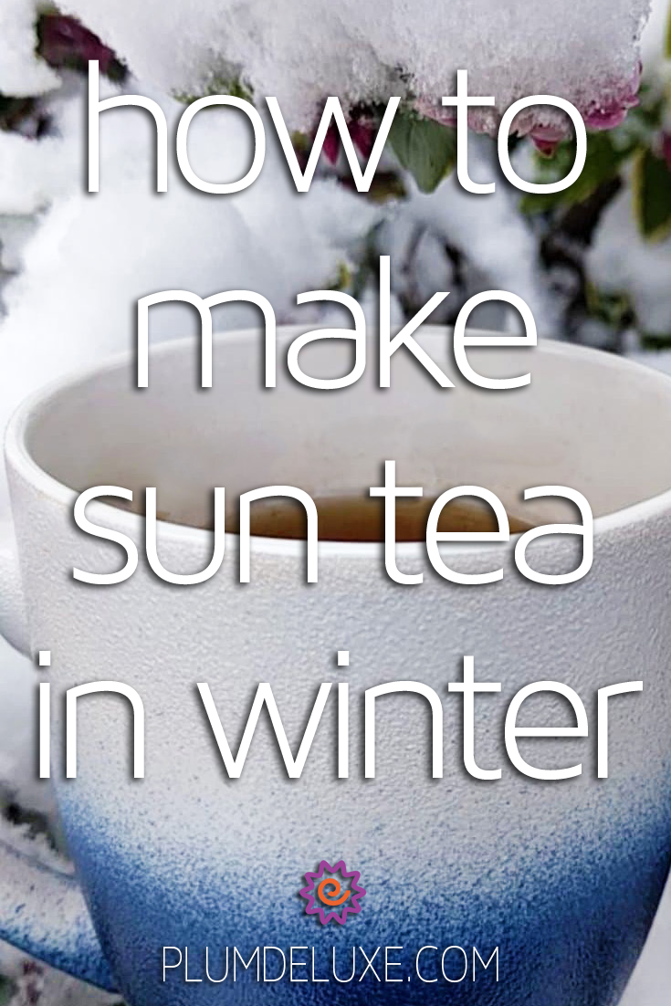 A white and blue ombre mug full of tea sits in front of a show-covered camellia bush. The overlay text reads: how to make sun tea in winter.