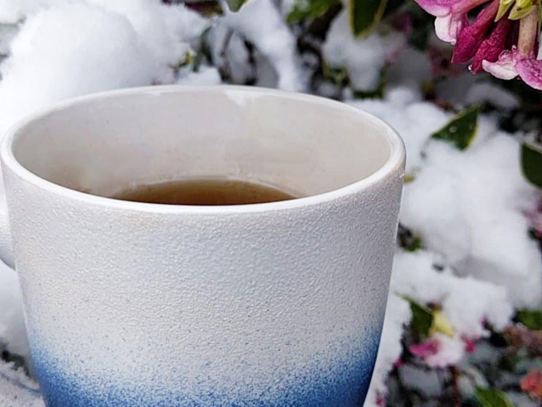 A white and blue ombre mug full of tea sits in front of a show-covered camellia bush.